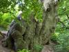 Rittrumer Bergepadd, Foto: Dorothea Jacob