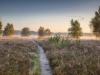 Hunte - Heide - Hügelgräber, Foto: Markus Drygala