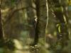 Moorpadd, Foto: Stefanie Knauer