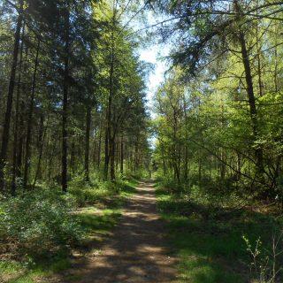 Waldweg. Foto: Gemeinde Hatten