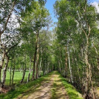 Frühling im Holler Moor. Foto: Touristik Palette Hude, Martina Weisensee