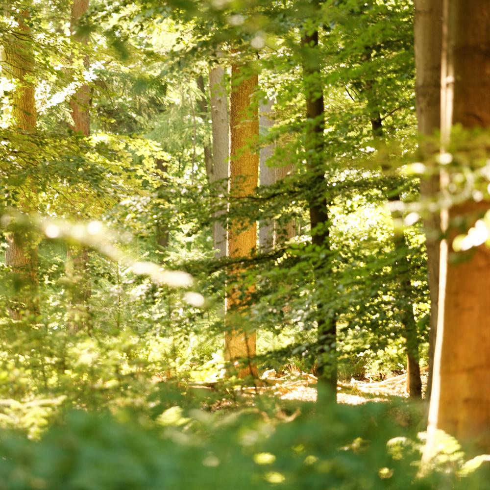 Wald im Sonnenlicht. Foto: Wendy Purba