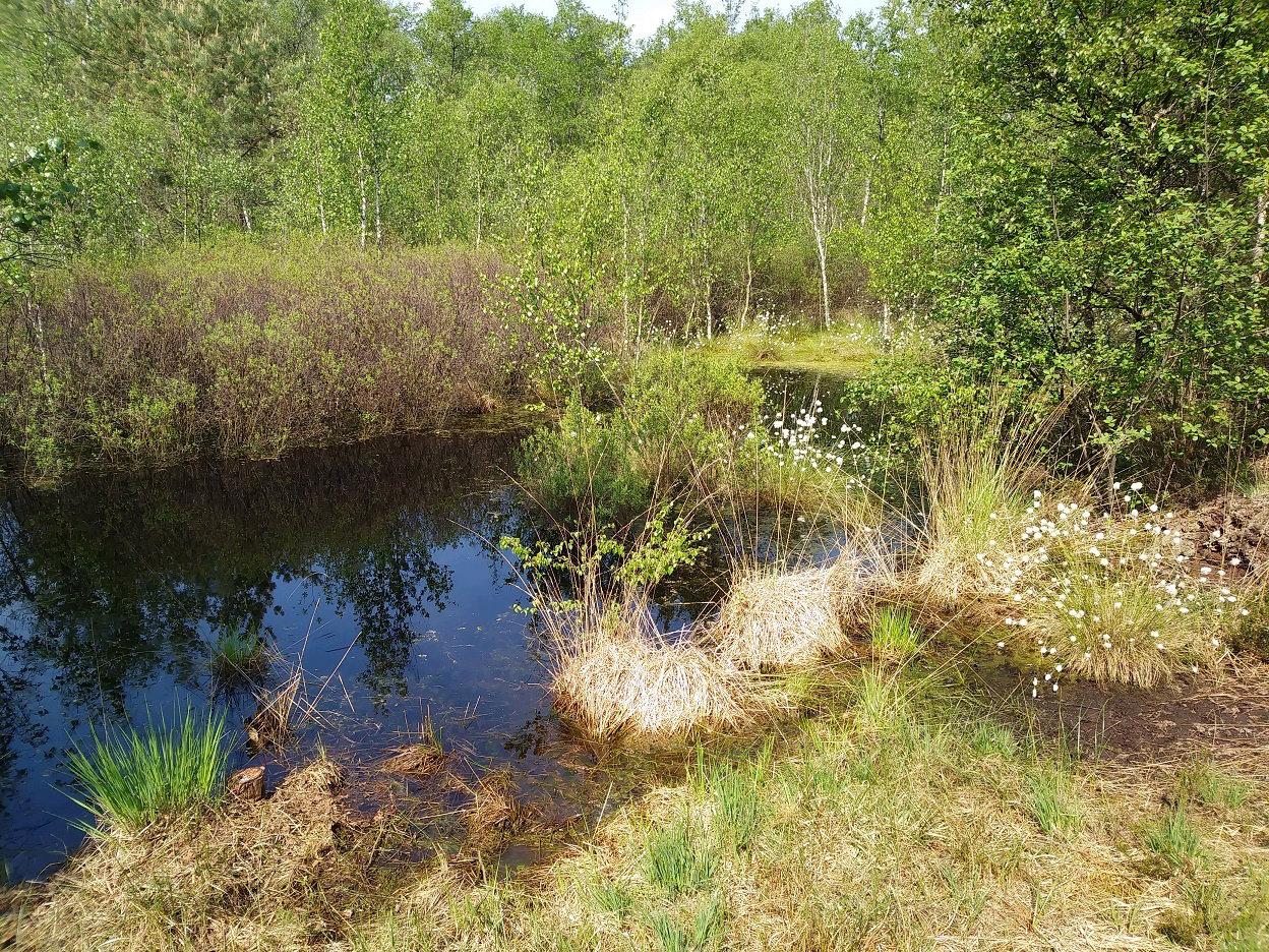 Naturpark Wildeshauser Geest: Holler- und Wittemoor: Heute wieder so ...